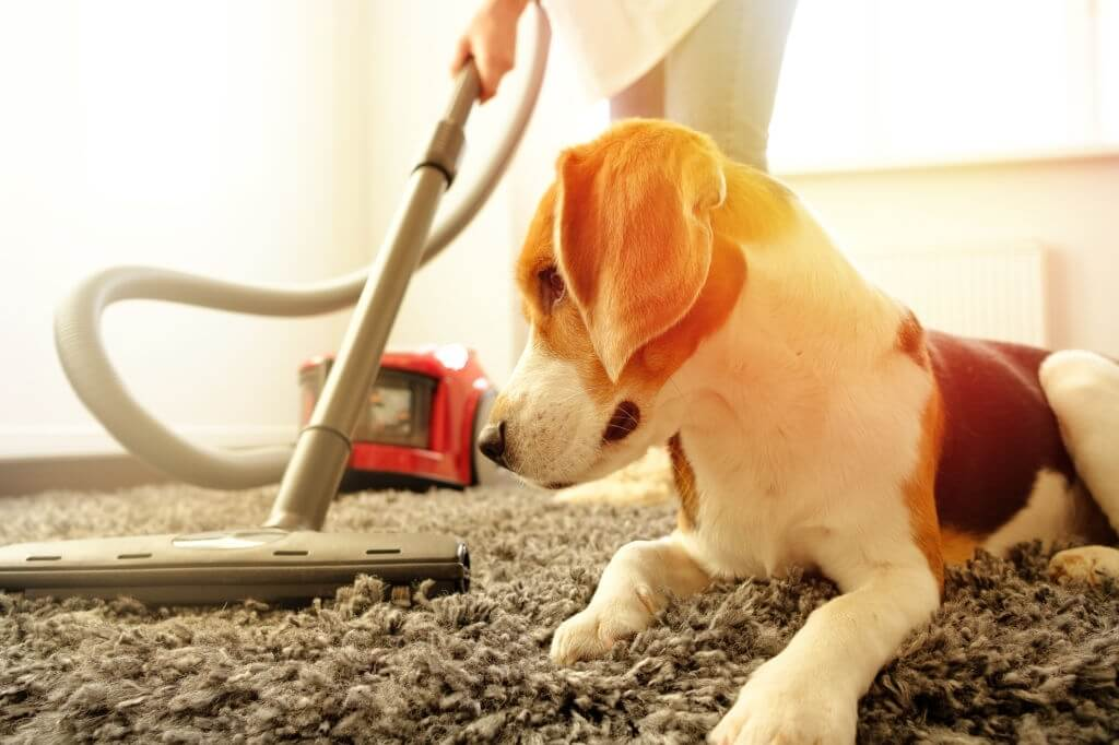 How a Carpet Cleaner Works